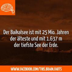 https://www.facebook.com/This.Brain.Farts