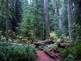 Redwood Forest. Amazing