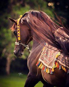 Borsalino K (Encore Ali by Ali Jamaal x Keepsake V by Huckleberry Bey) 1997 Bay Stallion