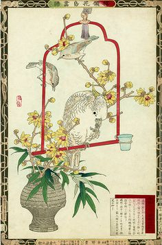 Bairei Flower and Bird Prints 1883 - Cockatoo Witchazel. Bairei was not a woodblock artist himself however his paintings were reproduced as woodblock prints.
