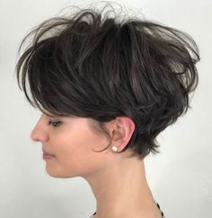 Disheveled Brown Pixie Bob