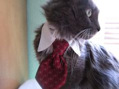 Made to Order Cat or Pet Tie by SewSmooth on Etsy, $19.00