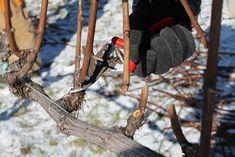Vita de vie : Ghid complet de plantare intretinere si tratamente. Bird Feeders, Outdoor Decor, Animals, Life, Animales, Animaux, Animal, Animais, Teacup Bird Feeders