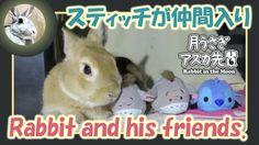 スティッチが仲間入り【ウサギのだいだい 】Rabbit and his friends. 2016年6月27日