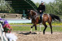 Рабочие моменты с молодой лошадью 4-х лет.