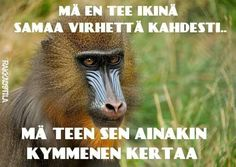 Humor, Memes, Funny, Animals, Quotes, Life, Quotations, Animales, Animaux