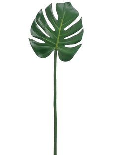 Monstera Leaf Stem in Green 29 Tall ** Learn more by visiting the image link. Palm Tree Leaves, Tropical Leaves, Tropical Flowers, Plant Leaves, Artificial Plants For Sale, Artificial Flowers, Palm Plant, Silk Plants, Office Plants