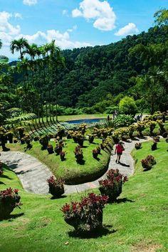 Martinique Jardin de Balata