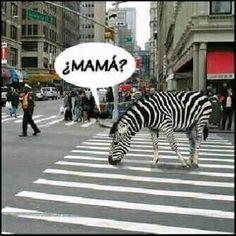 Mamaaaa!!!! jajajajajajajajajajajaja. estoy  morirse de la risa!!!