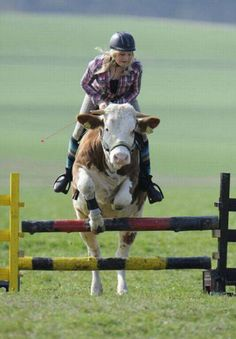 15 year old Regina of Germany who, after her parents refused to buy her a horse, has taught her cow some amazing skills. She now rides her cow like a horse and believe it or not, the cow actually obediently jumps as the pictures show!.  60