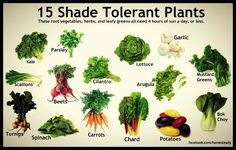 Got limited sun? These 15 vegetables only need 4 hours a day of direct light. Utilize them in those shaded areas of the yard, and leave the sun for the tomatoes.