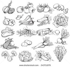 vegetable illustrations black and white - Google Search