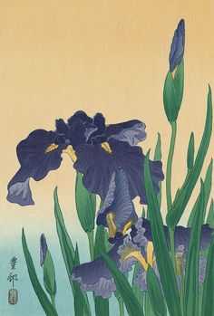 "dappledwithshadow: "" Ohara Koson (Japan, 1877-1945) - Flowering Iris (oban)…"