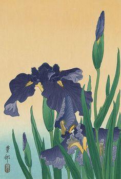 Ohara Koson (Japan, 1877-1945) - Flowering Iris (oban) - Woodblock Print