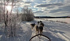 Dog sledding in Northern Norway with Holmen Husky Lodge. A variety of dog sledding trips in Northern Norway. Alta Norway, Dog Varieties, Sled, Winter Time, Day Trip, Outdoor Activities, Arctic, Husky, Europe