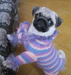 When I get my pug, I promise not to humiliate it with silly clothes, even though I could totally knit this sweater!