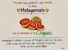 It would be intellectually dishonest to label genetically engineered crops due to fear of altering the genome, while mutagenesis gets a free pass.