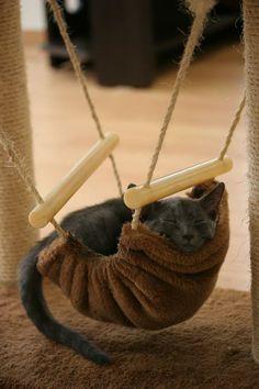 E' lunedì... che un'altra durissima settimana di lavoro abbia inizio!  #GoodMonday #Ossobello #Gatto