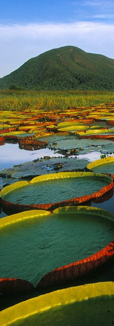 ~Pantanal Mato-Grossense