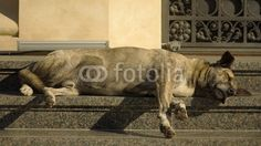 Bucharest, stairs of the National Bank, street dog sleeping under the winter sun