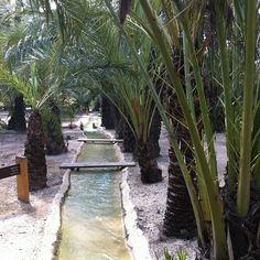 Huerto de San Pl�cido #elche #palmeral #visitelche #patrimoniohumanidad