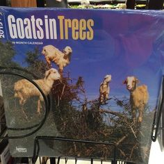 This calendar for animal lovers. | The 24 Most Oddly Specific Things Of All Time