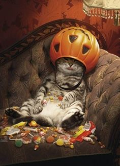"""Halloween card - verse inside: """"My motto.if it's worth doing, it's worth over-doing - Happy Halloween!""""This is my husband after an eventing at Mickey's Not So Scary Halloween Party! Cute Funny Animals, Cute Cats, Funny Cats, Chat Halloween, Vintage Halloween, Funny Halloween, Halloween Countdown, Halloween Pictures, Halloween Night"""