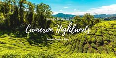 Must-See Places And Things To Do In Cameron Highlands | Elvira Edison
