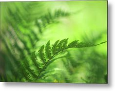 Green World Acrylic Print by Jenny Rainbow. All acrylic prints are professionally printed, packaged, and shipped within 3 - 4 business days and delivered ready-to-hang on your wall. Choose from multiple sizes and mounting options. Art Prints For Home, Fine Art Prints, Thing 1, Got Print, Any Images, How To Be Outgoing, See Photo, Fine Art Photography, Fine Art America