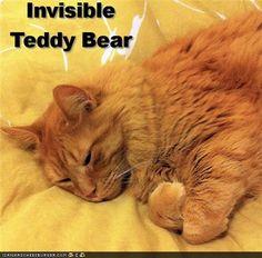 ...teddy bear