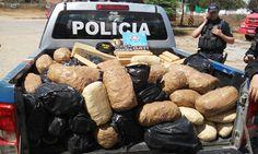 DE OLHO 24HORAS: POLICIAIS DO 4º BPM APREENDEM 249 Kg DE MACONHA EM...