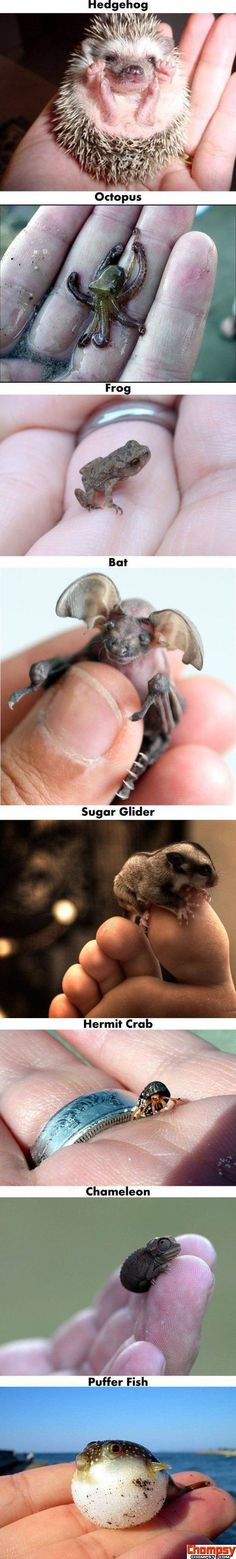 awwww i didnt know that some of these animals got that small!!!