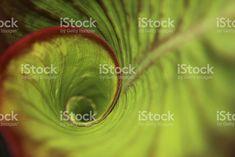 Espiral en la selva tropical de hoja verde con gotas de rocío foto de stock libre de derechos