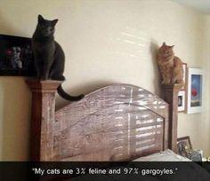 Dump A Day Funny Cats Fuel The Internet - 20 Pics