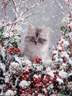 Kitten in a winter wonderland! Funny Cute Cats, Cute Cats And Kittens, I Love Cats, Crazy Cats, Kittens Cutest, Christmas Animals, Christmas Cats, Christmas Trees, Merry Christmas