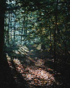 Fall #nordic #light #fall #forest #landscape #woods #Denmark #VSCO #vscocam #vscogrid #trees #igers #igersdenmark #autumn #visitdenmark #autumnfolk #thetrickytree by holtermand