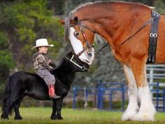 #Quarterhorse – Google+