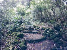 Climbing Mt. Scenery on Saba Island, Dutch Caribbean