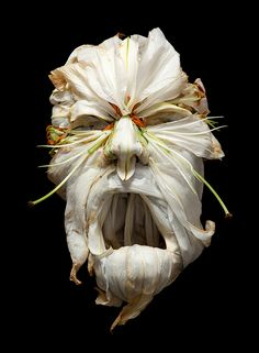 Giuseppe Arcimboldo art comes to life in the stunning photographs of Klaus Enrique - Swide