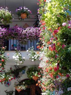 Otro patio cordobés ¡Precioso! 🌻🌷🌾