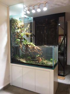 Die 2773 Besten Bilder Von 80 Paludarium In 2019 Aquarium Ideas