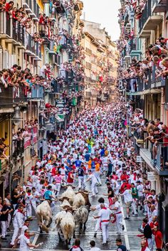 Watching the Running of the Bulls in Pamplona, Spain, in this National Geographic Your Shot Photo of the Day. National Geographic Society, San Fermin Pamplona, Running Of The Bulls, The Sun Also Rises, Spain Culture, Local Festivals, Flamenco Dancers, Shot Photo, Basque Country