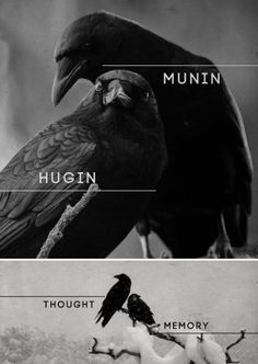"In Norse Mythology, Hugin (""thought"") and Munin (""memory"" or ""mind"") are a pair of ravens that are the shamanic helping spirits of the god Odin. These informants are two of the many sources of Odin's prodigious wisdom and it is from this associated that O Norse Pagan, Odin Norse Mythology, North Mythology, Raven Tattoo, Norse Tattoo, Tattoo Symbols, Les Religions, Crows Ravens, Norse Vikings"