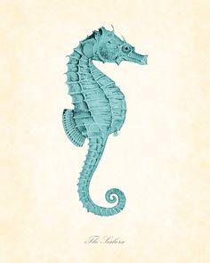 Vintage Seahorse in Aqua Natural History Art Print 8 x 10. $10.00, via Etsy.