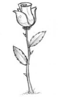 Cómo dibujar paso a paso una rosa a lápiz o carboncillo
