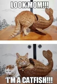 Look away... Look away... Must resist urge... to eat... catfish...