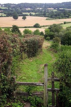 Hedgerow in Kent, England Kent England, England And Scotland, England Ireland, British Countryside, British Isles, Great Britain, East Sussex, Places To See, Beautiful Places