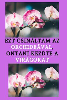Orchids, Garden, Flowers, Plants, Garten, Lawn And Garden, Gardens, Plant, Gardening