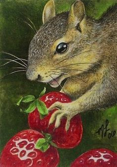 Wildlife Squirrel Art by Melody Lea Lamb ACEO by MelodyLeaLamb, $6.25