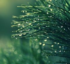 I have been reading a lot of biology and watching documents these days, to understand some of the process and theories of life in nature. Photography Business, Girl Photography, Macro Photography, Theory Of Life, Zen, I Love Rain, Brindille, Morning Dew, Modern Metropolis